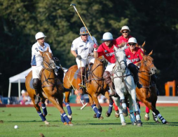 NSCF Night @ Newport Polo  August 18th